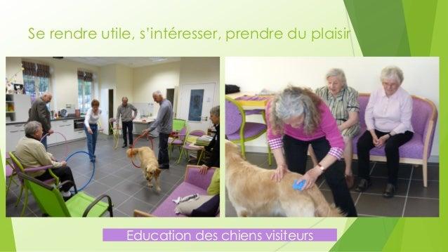 Se rendre utile, s'intéresser, prendre du plaisir  Education des chiens visiteurs