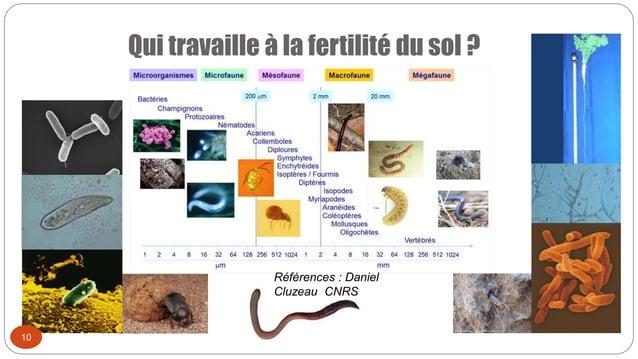 Qui travaille à la fertilité du sol ? 10 Références : Daniel Cluzeau CNRS