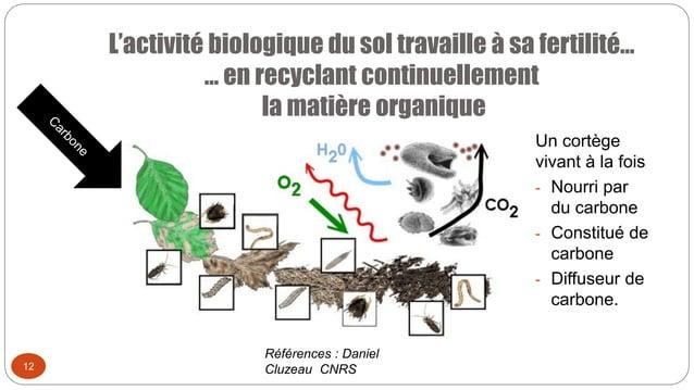 L'activité biologique du sol travaille à sa fertilité… … en recyclant continuellement la matière organique 12 Un cortège v...