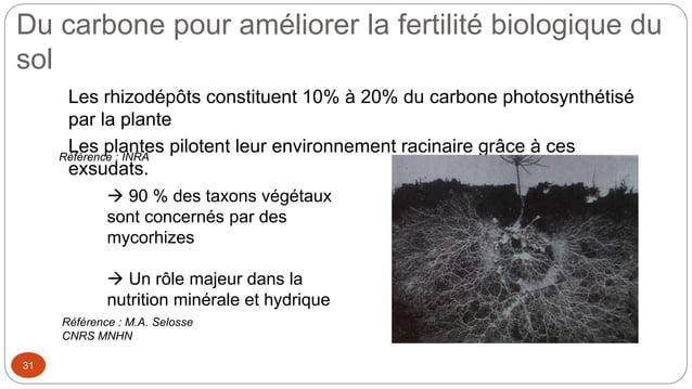 Du carbone pour améliorer la fertilité biologique du sol 31 Les rhizodépôts constituent 10% à 20% du carbone photosynthéti...