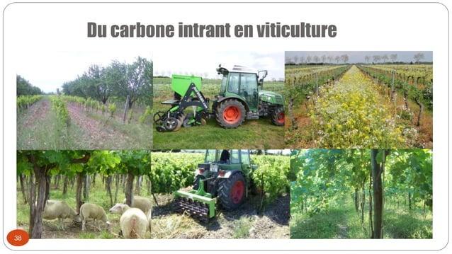 Du carbone intrant en viticulture 38