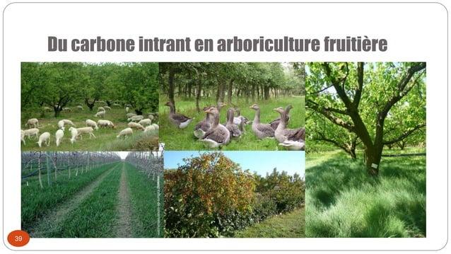 Du carbone intrant en arboriculture fruitière 39