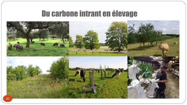 Du carbone intrant en élevage 40