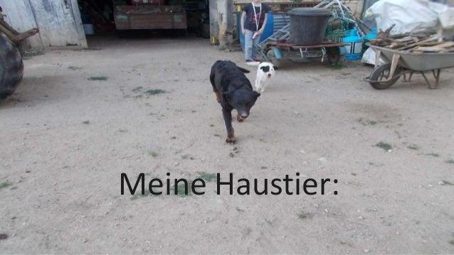 Meine Haustier: