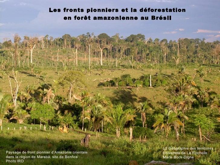 Les fronts pionniers et la déforestation en forêt amazonienne au Brésil Paysage de front pionnier d'Amazonie orientale  da...