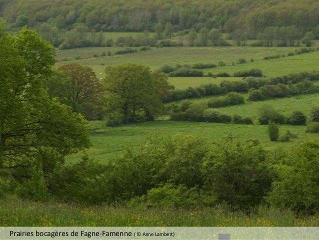 Prairies bocagères de Fagne-Famenne ( © Anne Lambert)