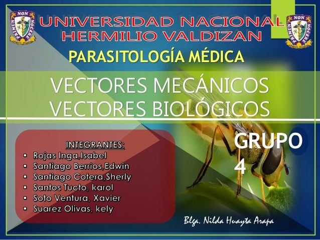 PARASITOLOGÍA MÉDICA GRUPO 4 VECTORES MECÁNICOS VECTORES BIOLÓGICOS Blga. Nilda Huayta Arapa