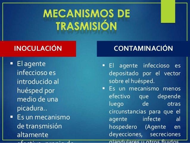 VIRUS RICKETTSIAS BACTERIAS PROTOZOARI OS HELMINTOS DENGUE TIFUS PESTE PALUDISMO Aedes aëgypti Pediculus humanus Xenopsyll...
