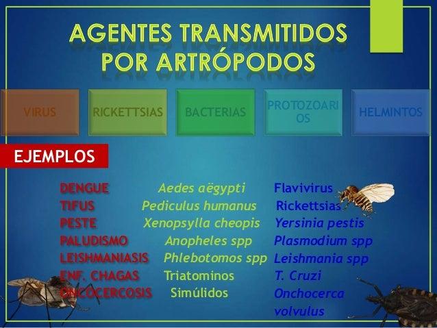 EXPANSIÓN GEOGRÁFICA DE LOS VECTORES (TRANSPORTE PASIVO) EXPANSIÓN GEOGRÁFICA DE LOS RESERVORIOS CAMBIOS ECOLÓGICOS AGLOME...