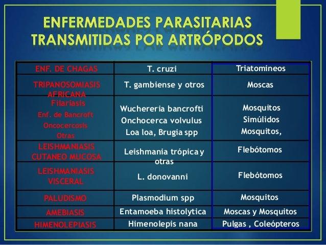 MOSQUITOS (Aedes, Culex, Anopheles) FLEBOTOMOS (P. sergenti, P.argentipes, P.langeronis) PULGAS (X.cheopis, X.astia, X.bra...