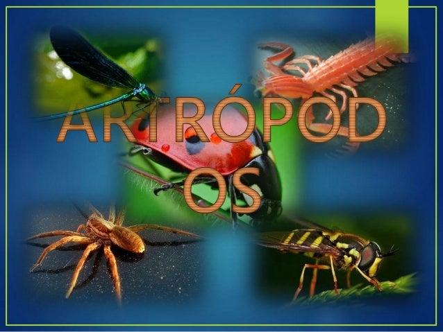 Invertebrados Cuerpo segmentado Exoesqueleto quitinoso. Provistos de patas articuladas. Hemocele Sistema nervioso Aparato ...