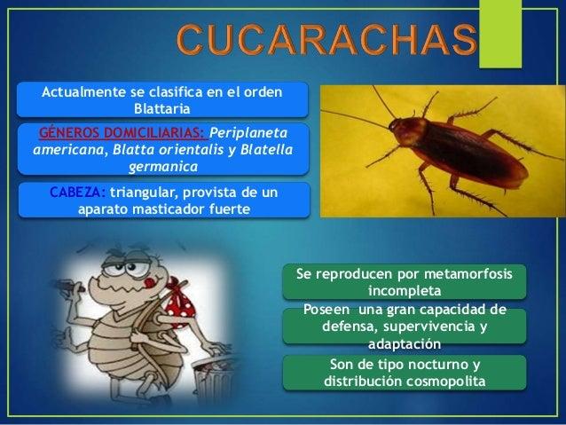 Son insectos de distribución cosmopolita, conocidos con el nombre común de zancudos por las patas largas y delgadas. Las h...