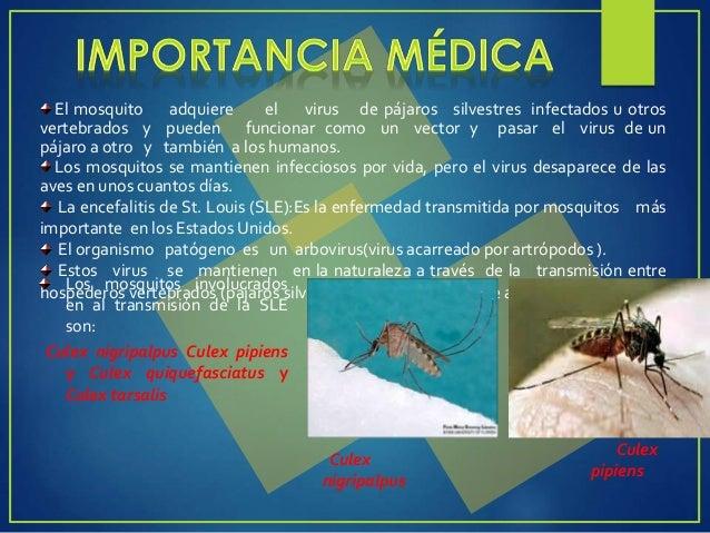 PREVENCIÓN Y CONTROL Eliminar la presencia de mosquitos en la vivienda (utilizando repelentes, colocando mosquiteros o tel...