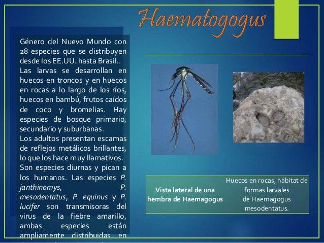  Comprende a los dípteros pertenecientes a los géneros:  Phlebotomus,  Lutzomyia,  Simulium,  Culicoides.  Son mas p...