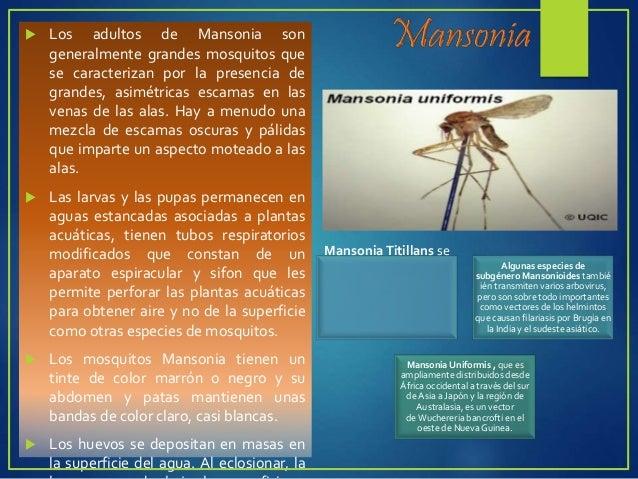 Transmiten:  L. Visceral (kala- azar)  L. Cutánea del Viejo Mundo (botón de Oriente)  L. Mucocutánea (uta)  L. Tegumen...