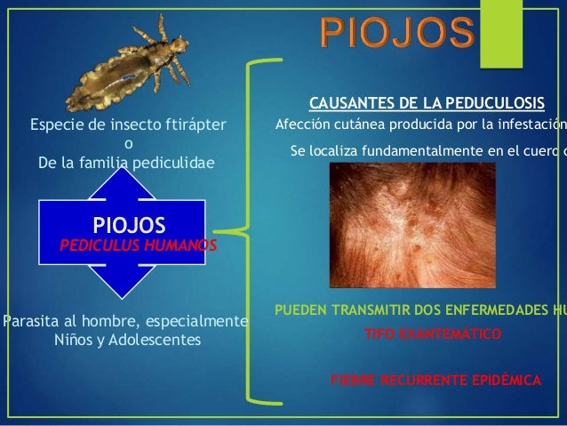 Siphonapteras, ápteros Pulex irritans, Xenopsylla cheopis, Ctenocephalides canis y felis VECTOR BIÓLOGICO (Yersinia pestis...