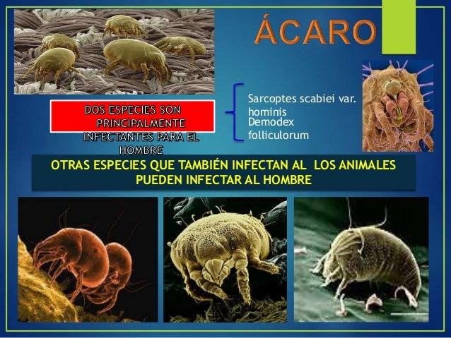 VECTORES MECANICOS Y BIOLOGICOS