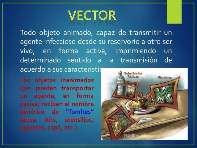 MECÁNICOS BIOLÓGICOS  El agente transmitido no evoluciona ni se multiplica el vector.  La asociación patógeno- vector es...