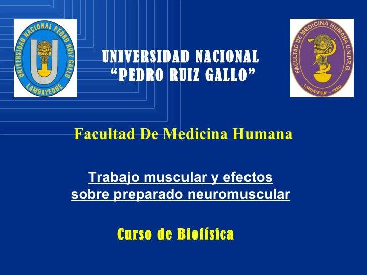 """Facultad De Medicina Humana   UNIVERSIDAD NACIONAL  """"PEDRO RUIZ GALLO"""" Curso de Biofísica Trabajo muscular y efectos sobre..."""