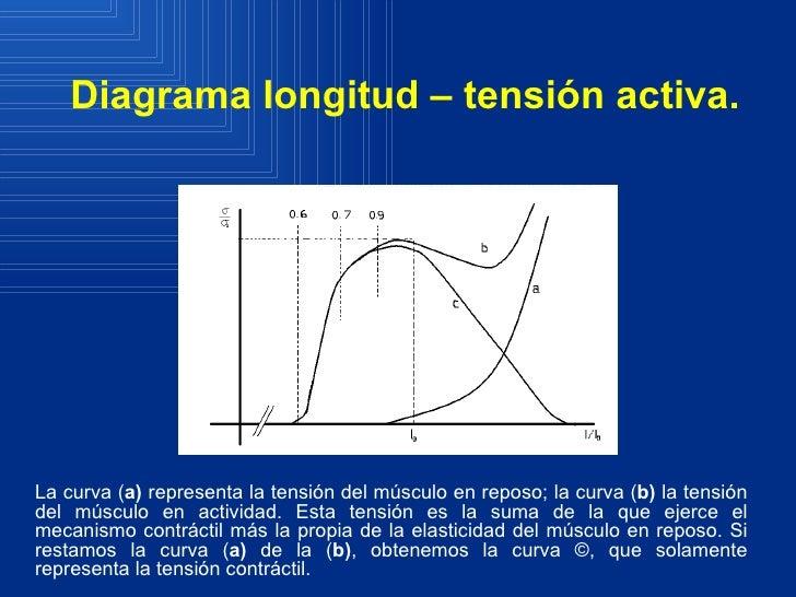 Magnífico Diagrama De Músculo Modelo - Anatomía de Las Imágenesdel ...