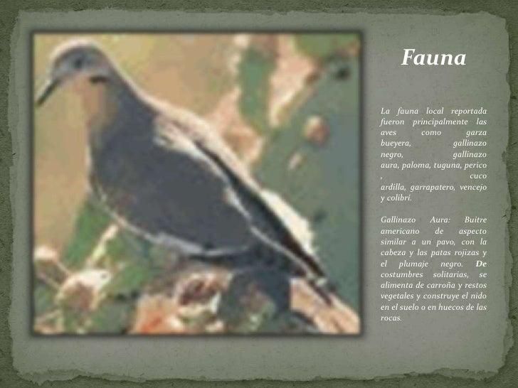 Fauna<br /><br />La fauna local reportada fueron principalmente las aves como garza bueyera, gallinazo negro, gallinazo a...