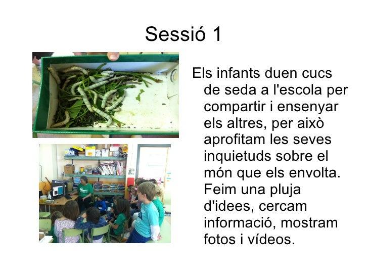 Sessió 1    Els infants duen cucs      de seda a lescola per      compartir i ensenyar      els altres, per això      apro...