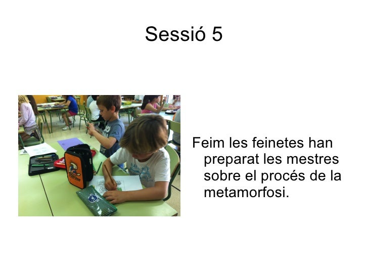 Sessió 5    Feim les feinetes han     preparat les mestres     sobre el procés de la     metamorfosi.