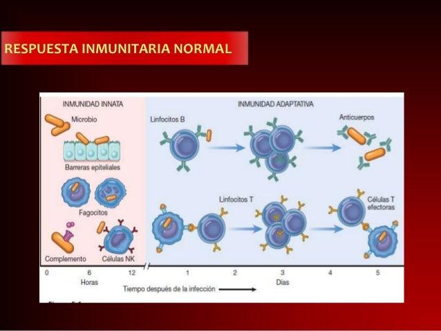Diapositiva de inmunologia Slide 3