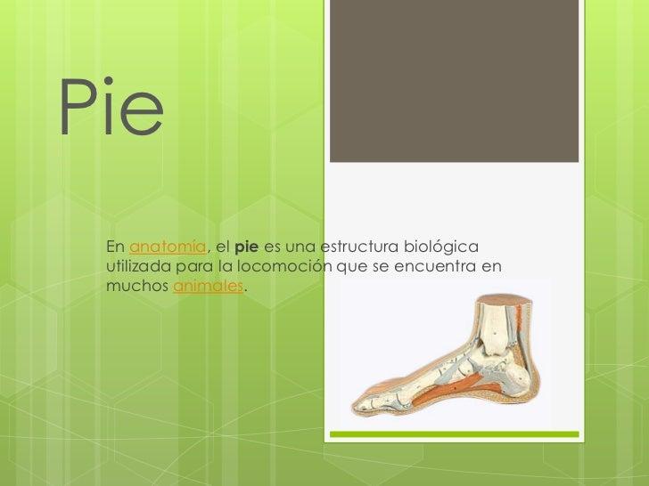 Magnífico Dedo Del Pie De Anatomía De Uñas Regalo - Anatomía de Las ...