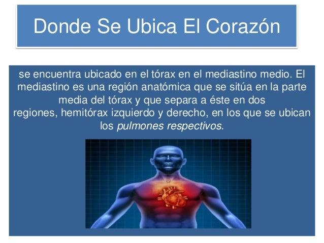Diapositiva el corazon