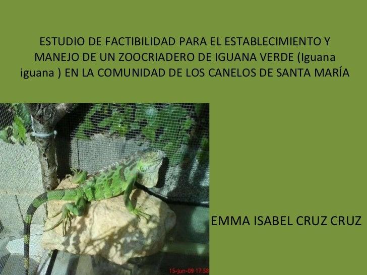 ESTUDIO DE FACTIBILIDAD PARA EL ESTABLECIMIENTO Y MANEJO DE UN ZOOCRIADERO DE IGUANA VERDE (Iguana iguana ) EN LA COMUNIDA...