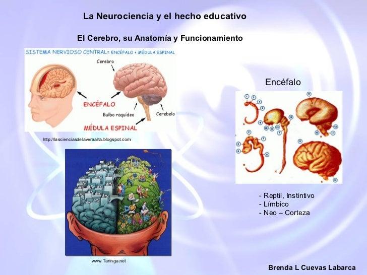 Diapositiva neurociencia