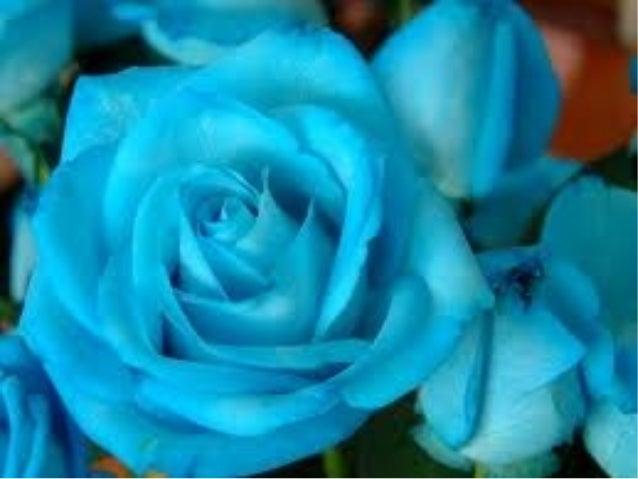 Diapositiva De Rosas Bonitas