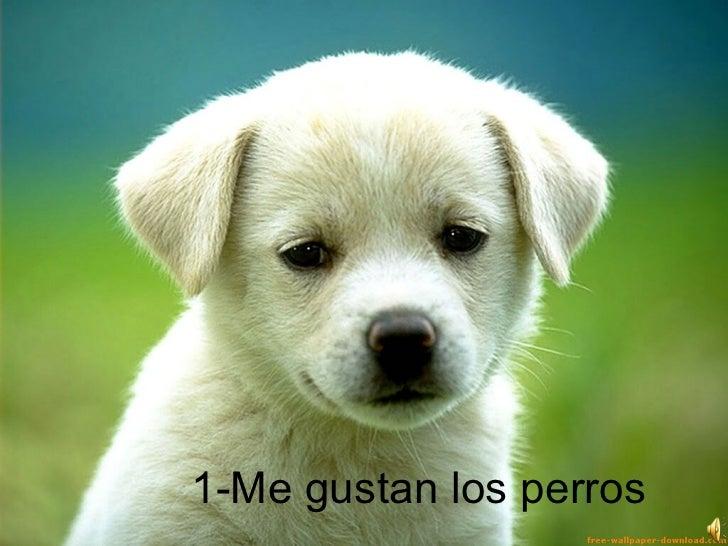 1-Me gustan los perros