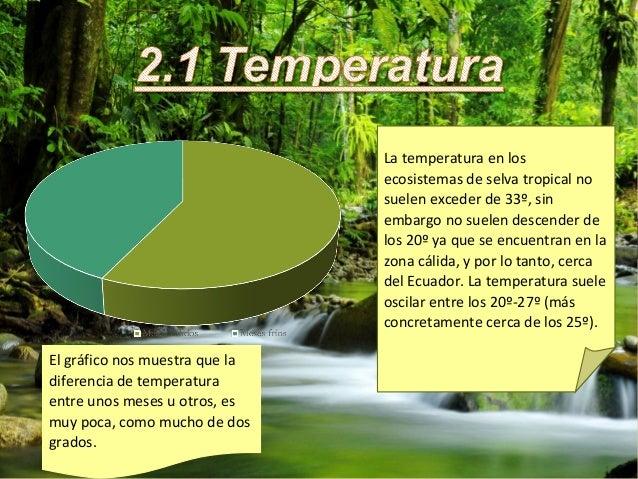 La selva tropical - El tiempo en macanet de la selva ...