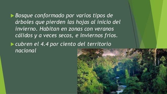 Selva mediana o bosque tropical subcaducifolio for Arboles que no se le caen las hojas en invierno