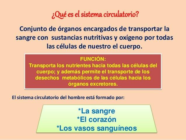 FUNCIÓN: Transporta los nutrientes hacia todas las células del cuerpo; y además permite el transporte de los desechos meta...