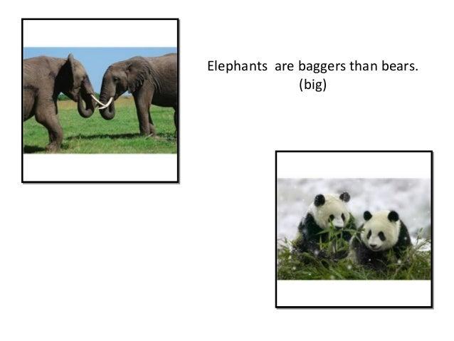 Elephants are baggers than bears. (big)