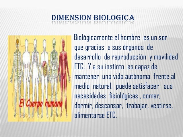 DIMENSION BIOLOGICABiológicamente el hombre es un serque gracias a sus órganos dedesarrollo de reproducción y movilidadETC...