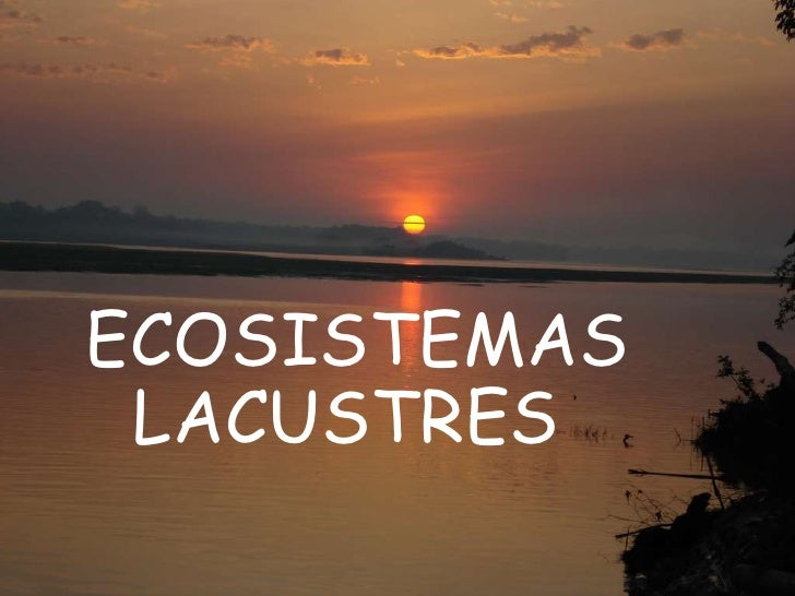ECOSISTEMAS LACUSTRES