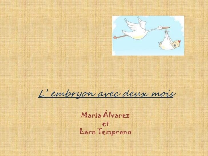 L' embryon avec deux mois       María Álvarez             et       Lara Temprano