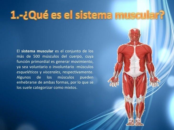 Diapositivas Del Musculo Terminadas Slide 2