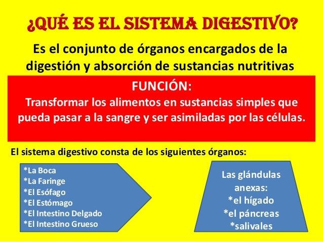 ¿Qué es el sistema digestivo?    Es el conjunto de órganos encargados de la   digestión y absorción de sustancias nutritiv...