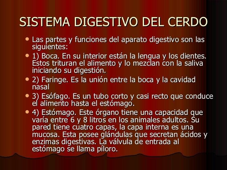 Diapositivas Del Sistema Digestivo En Cerdos