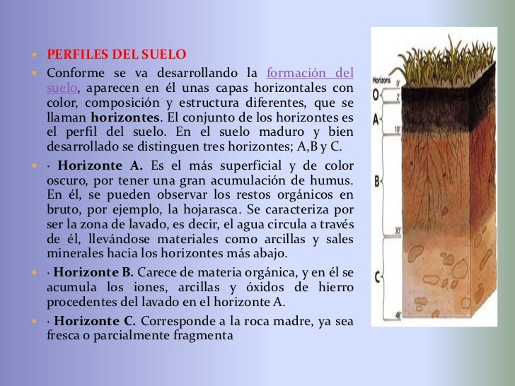 Diapositivas del suelo for A que se denomina suelo