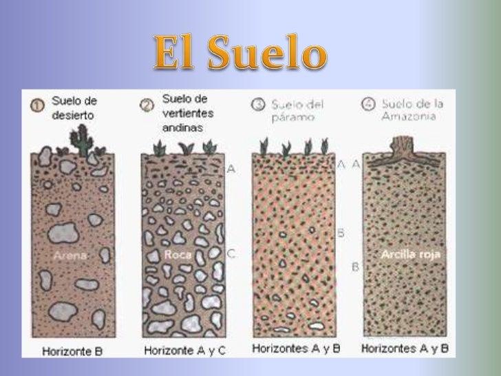 Diapositivas del suelo for Componentes quimicos del suelo