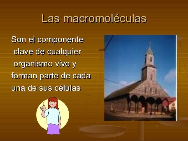 Las macromoléculas Son el componente clave de cualquier organismo vivo y forman parte de cada una de sus células