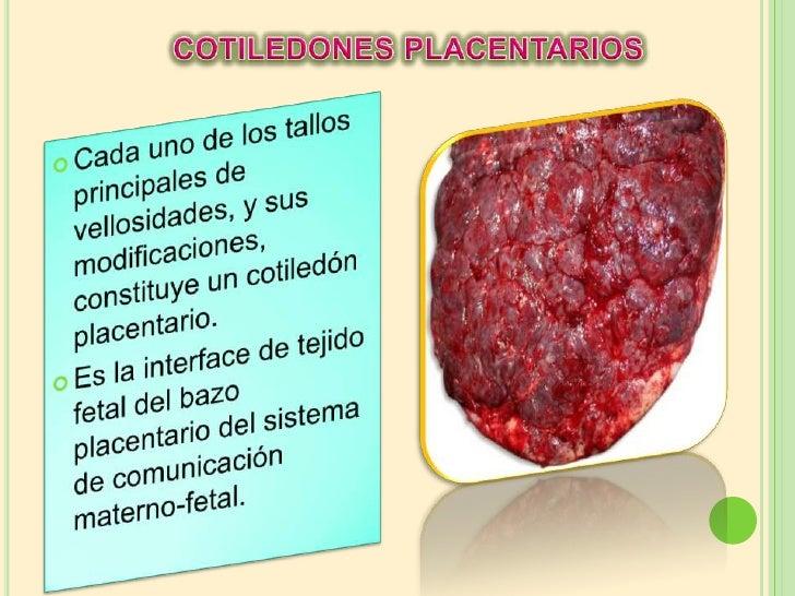Diapositivas de placenta obstetricia Slide 3