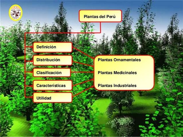 Diapositivas de plantas del peru 2010 for 5 nombres de plantas ornamentales