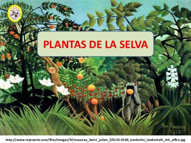 Diapositivas De Plantas Del Peru 2010